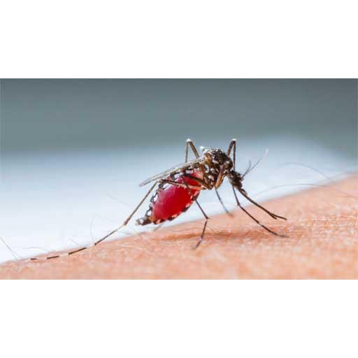 Traitement de Typhoïde et Paludisme et Fièvre jaune
